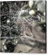 Cone Web With Dew Acrylic Print