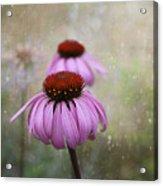 Coneflower Dream Acrylic Print