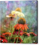 Coneflower Garden 2789 Idp_2 Acrylic Print