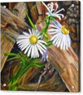 Coneflowers Acrylic Print