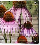 Cones In Craquelure Acrylic Print