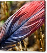 Congo African Grey Feather Acrylic Print