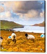 Connemara Sheep Grazing Over Killary Fjord Acrylic Print