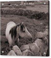 Connemura Horse-signed-#300 Acrylic Print