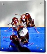 Consider The Ants 2 Of 3 Acrylic Print