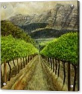Constantia Uitsig Vines Pleine Aire Acrylic Print