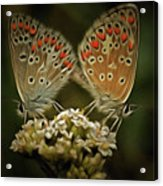 Contact - Detail Of The Butterflies Acrylic Print