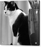 Contemplative Cat Black And White Acrylic Print