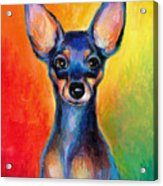 Contemporary Colorful Chihuahua Chiuaua Painting Acrylic Print