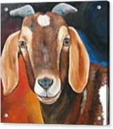Contemporary Goat Acrylic Print by Laura Carey