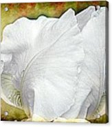 Contemporary White Iris Acrylic Print