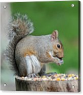 Content Eating Acrylic Print