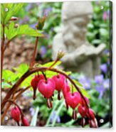 Content Gnome With Bleeding Hearts Acrylic Print