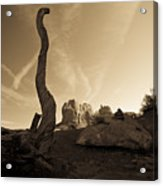 Contrails And Driftwood Acrylic Print