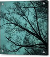 Contrasted Trees Acrylic Print