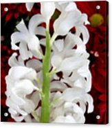 Contrasting Red And White Flowers Acrylic Print
