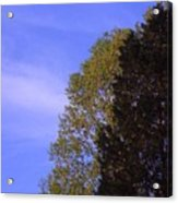 Contrasting Trees Against Sky Acrylic Print by Randy Muir