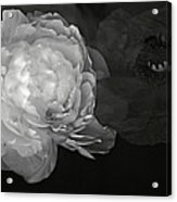 Contrasts In Floral Kingdom In Black And White. Acrylic Print