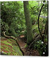 Cook Forest Acrylic Print