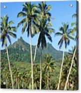 Cook Islands Acrylic Print