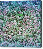 Cool Blue Pink Petals On Stones Acrylic Print