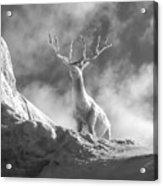 Cool Deer 2 Acrylic Print