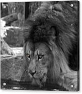 Cool Drink Of Water  Black And White  T O C Acrylic Print