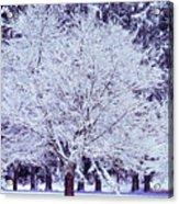 Cool Sunset Essence Of Winter Acrylic Print
