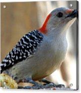 Cool, Woodpeckers Like Sunflower Seeds Acrylic Print