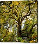 Coole Park Tree Galway Ireland Acrylic Print