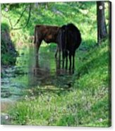 Cooling Spring Acrylic Print