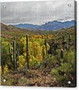 Coon Creek Looking South Acrylic Print