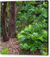 Coontie  Florida Arrowroot Or Indian Breadroot Acrylic Print