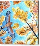 Cooper's In Autumn Acrylic Print