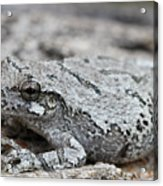 Cope's Gray Tree Frog #5 Acrylic Print