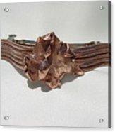 Copper Barrette 2 Acrylic Print