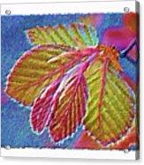 Copper Beech Leaves Acrylic Print