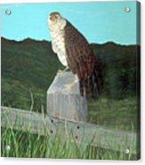 Copper Hawk Acrylic Print