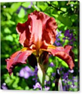 Copper Iris Squared 5 Acrylic Print