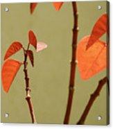 Copper Plant 2 Acrylic Print