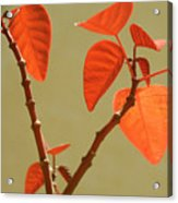 Copper Plant Acrylic Print