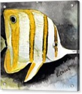 Copperband Butterflyfish  Acrylic Print