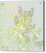 Coprosama Replens Pastel Acrylic Print
