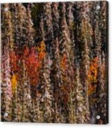 Copse Of Color  Acrylic Print