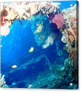 Coral Archways Acrylic Print
