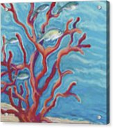Coral Assets Acrylic Print