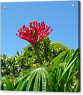 Coral Bush With Flower And Fruit Acrylic Print