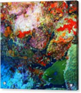 Coral Eel Acrylic Print