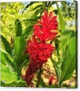 Coral Flower Acrylic Print