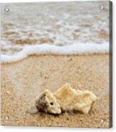 Coral On The Beach Acrylic Print